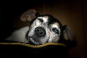 Animais com deficiência visual também podem ter uma vida feliz