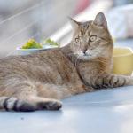 Animais de estimação não podem ser proibidos em condomínios