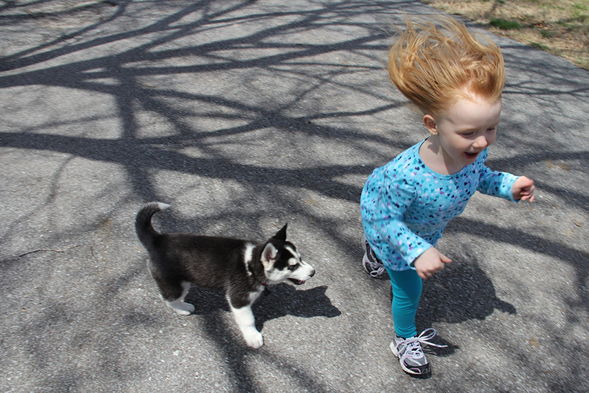 Contato precoce com cães reduz risco de asma infantil
