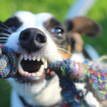 Gaste a energia do seu cão também dentro de casa