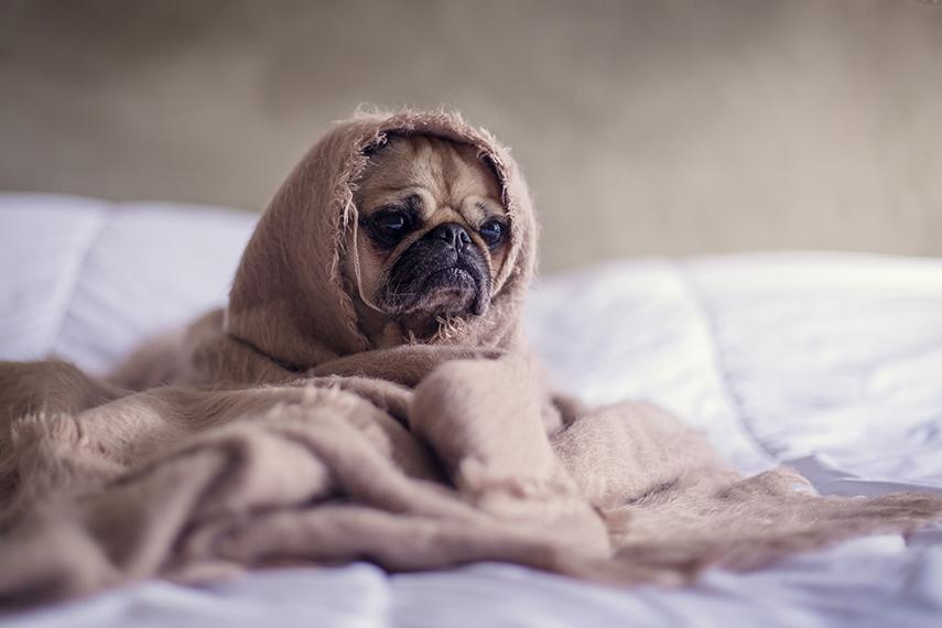 Gripe, asma e bronquite atacam cães e gatos