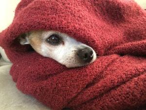 Inverno chegando: pets são mais vulneráveis ao frio