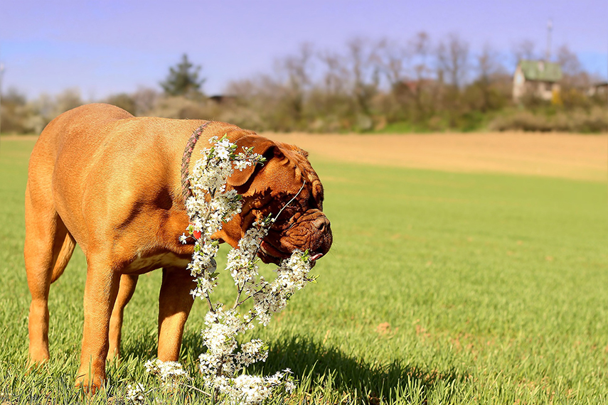 Plantas podem ser um grande perigo à saúde de seu pet