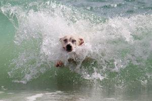 Praia não é lugar indicado para os pets