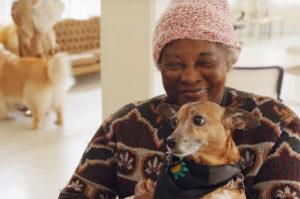 Cães promovem a qualidade na vida das pessoas