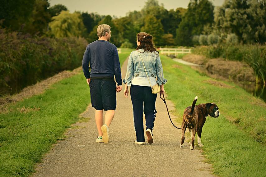 Com quem fica o animal em caso de separação dos donos?