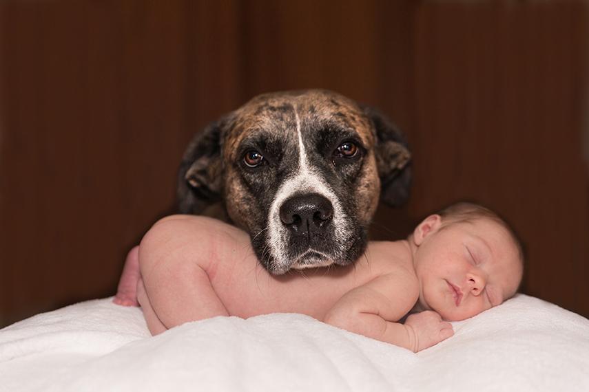 Prepare o seu filho de quatro patas para a chegada do bebê