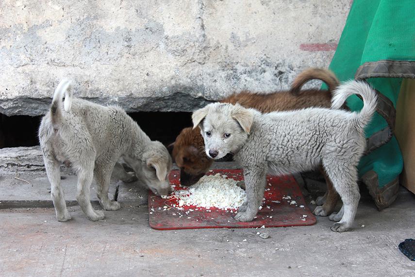 País tem quase 4 milhões de animais em situação de vulnerabilidade