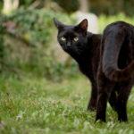 Movimentos da cauda do gato expressam diversos sentimentos