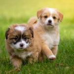 Vacinas preservam a vida e a saúde do seu pet
