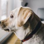 Mudança de casa afeta os animais de estimação