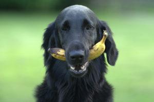 Posso dar legumes, verduras e frutas para o meu cachorro?