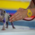Check-up pode prevenir doenças e prolongar a vida dos animais