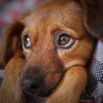 Infecção urinária: não deixe seu animal passar por esse sofrimento