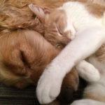 Cão e gato, uma relação que pode ser pacífica e até afetuosa