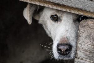 Fogos e rojões: o que fazer nessa época de terror do seu pet