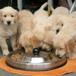 Deficiência de vitaminas pode causar danos graves à saúde do animal