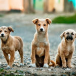 Projeto do Senado cria o marco regulatório dos animais de estimação