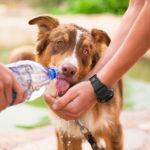 Cuide do bem-estar de seu pet nesses dias de muito calor