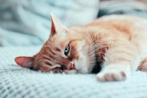 Doenças urinárias em felinos: evite esse sofrimento para o seu peludo