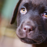 O choro do seu cão é uma forma de ele se comunicar com você
