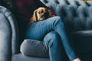 Se seu cachorro tem ciúme, saiba lidar com esse comportamento
