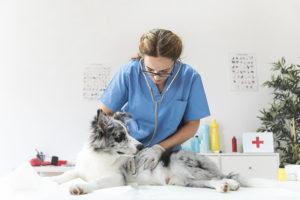 Consultas de rotina são muito importantes à saúde dos animais