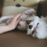 O que você precisa saber sobre o seu pet em relação ao coronavírus