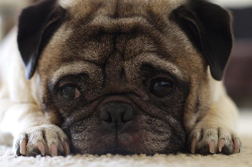 Problemas de saúde afetam os animais com a chegada do outono