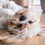 Entenda a felicidade do seu cão quando você chega em casa