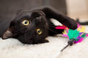 Acessórios para gatos trazem diversão e vantagens à saúde